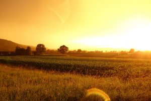 agriculture-cereal-countryside-587970